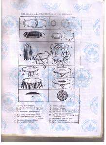 grade 4 - page 4